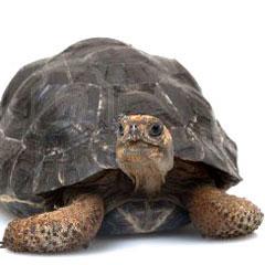 turtlesq
